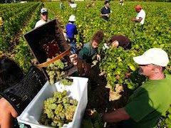 Правительство Италии предоставит возможность сезонным работникам, занятым в сельском хозяйстве и туристско-гостиничном бизнесе, уже получившим в прошлые годы многогодичные nulla osta, вновь получить разрешение на въезд в Италию на срок до 3 лет