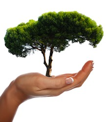Эта мера направлена на содействие развития городских зеленых зон. Был даже учрежден Национальный день деревьев, который проходит 21 ноября каждого года